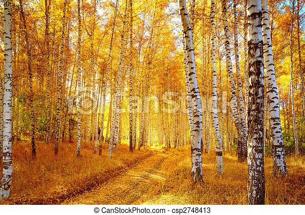 秋の森林, シラカバ - csp2748413
