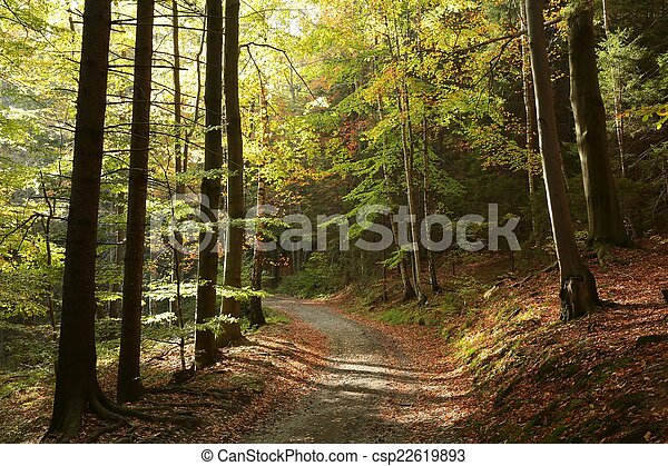秋の森林, 絵のよう - csp22619893