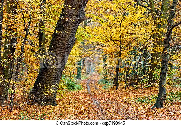秋天, 公園 - csp7198945