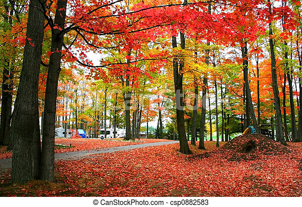 秋天, 紅色 - csp0882583