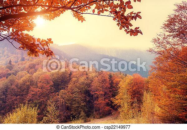 秋季森林 - csp22149977