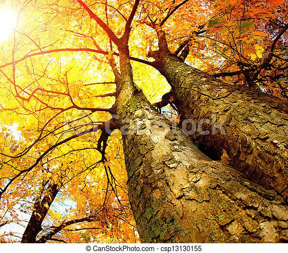 秋季, 树。, 落下 - csp13130155