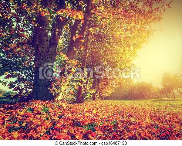 秋, 公園, 風景, 秋 - csp16487138