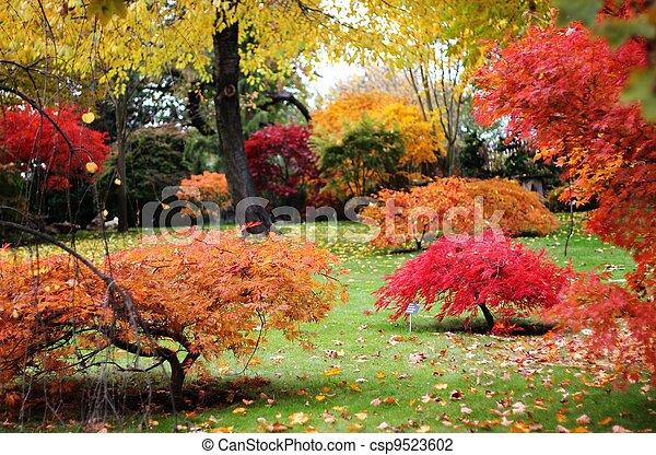 秋, 日本の庭 - csp9523602