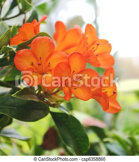 秋, 花 - csp6358860