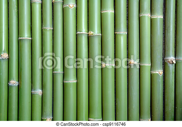 竹, 背景 - csp9116746