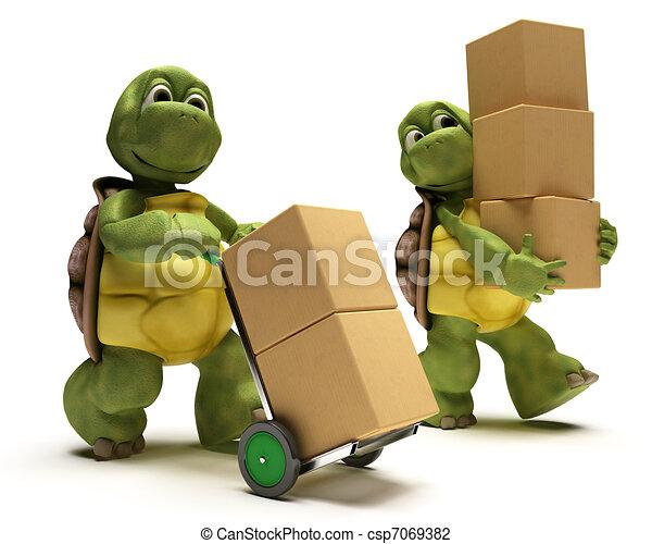 箱, カメ, 出荷 - csp7069382