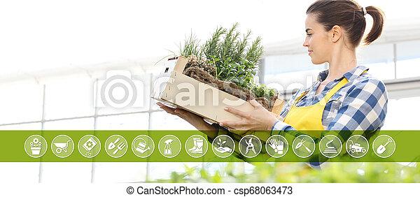 箱, 装置, 女, 園芸, 庭, フルである, インターネット商業, 木製である, 春, アイコン, ハーブ, 概念, 微笑, 白い背景, スパイス - csp68063473