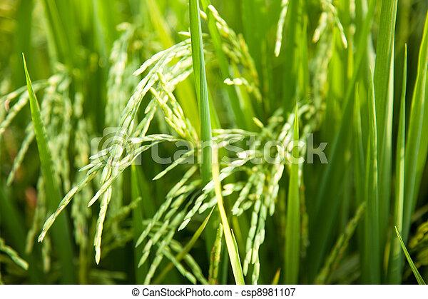 米, fields. - csp8981107