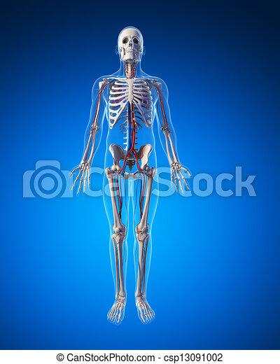 系統, 血管 - csp13091002