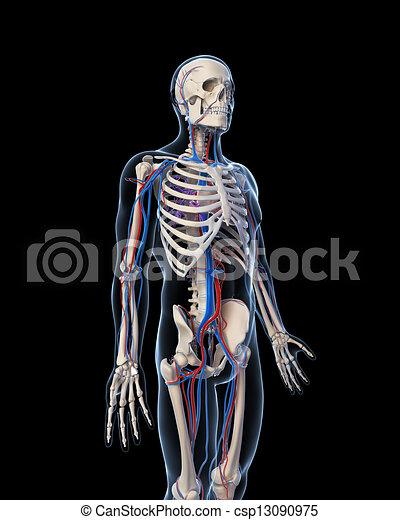 系統, 血管 - csp13090975