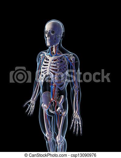系統, 血管 - csp13090976
