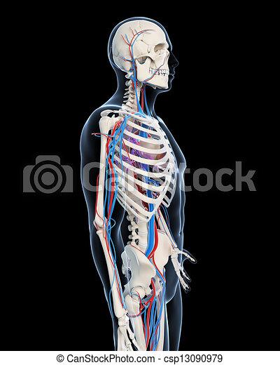 系統, 血管 - csp13090979