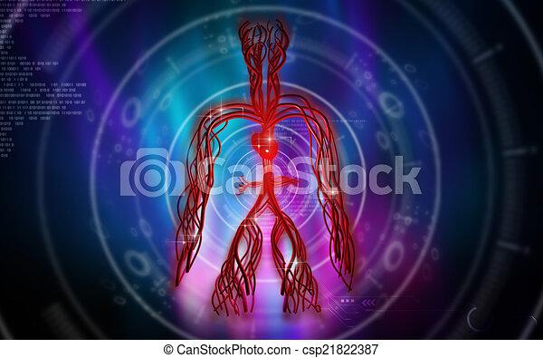 系統, 血管 - csp21822387