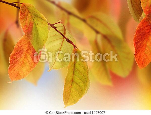 紅葉, デザイン - csp11497007