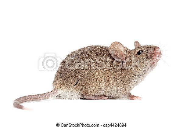 終わり, 白, マウス, の上, 隔離された - csp4424894