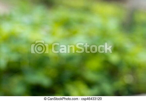 綠色的背景 - csp46433120