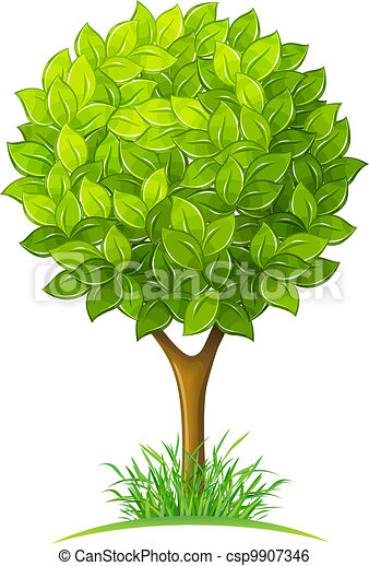綠葉, 樹 - csp9907346