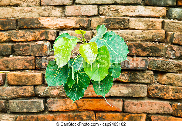 緑のプラント, 古い, 白熱, brickwall - csp9403102