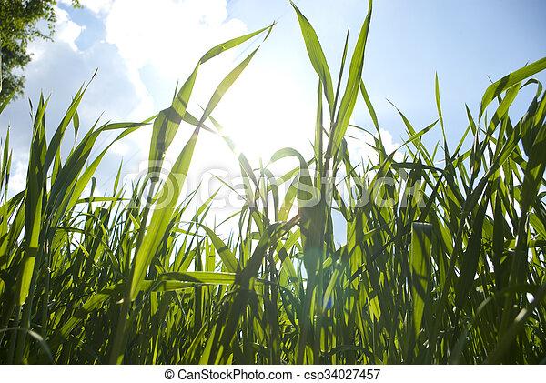緑の採草地 - csp34027457