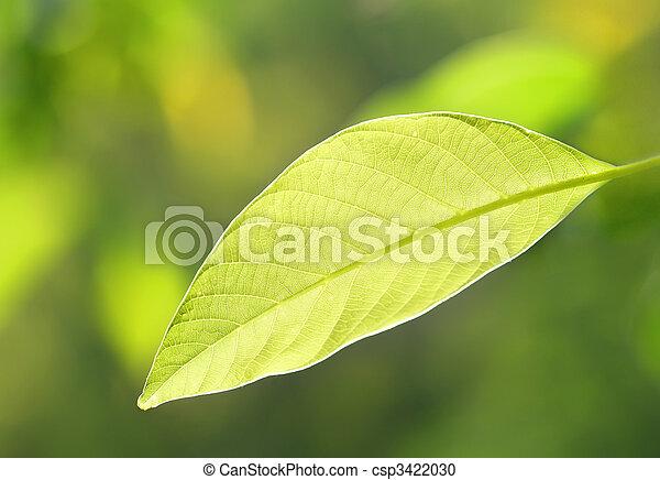 緑の葉 - csp3422030