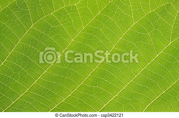 緑の葉 - csp3422121
