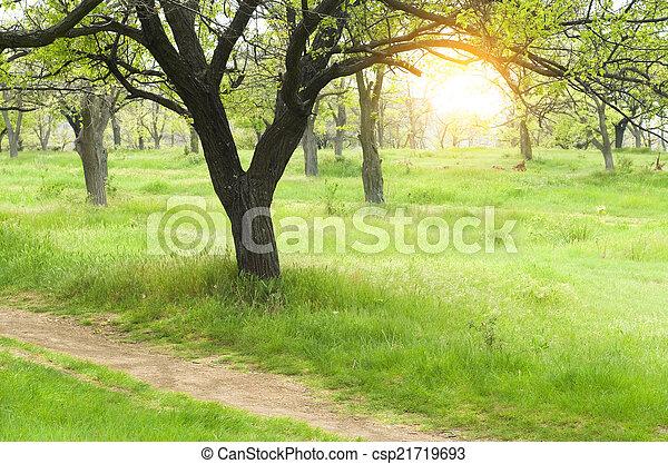 緑公園 - csp21719693