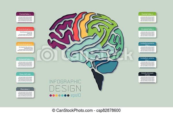 線, 図, 色, 設計された, ベクトル, テンプレート, infographics, 脳, スタイル - csp82878600