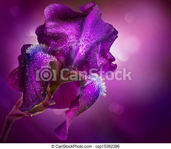美しい, アイリス, 花, 芸術, すみれの花, design. - csp15362386