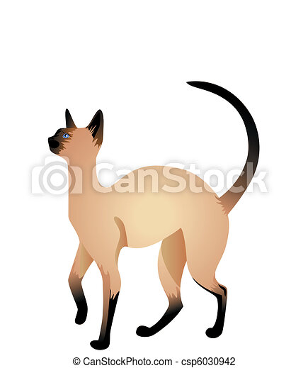 美しい シャム 猫
