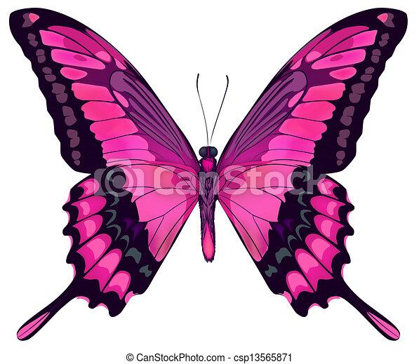 美しい, ピンク, 蝶, iillustration, 隔離された, ベクトル, 背景, 白 - csp13565871