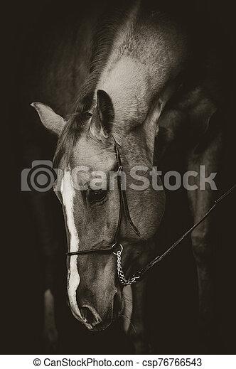 美しい, 低いキー, スタイル, 馬, 肖像画 - csp76766543