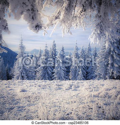 美しい, 冬, 雪, 木, カバーされた, 風景 - csp23485106