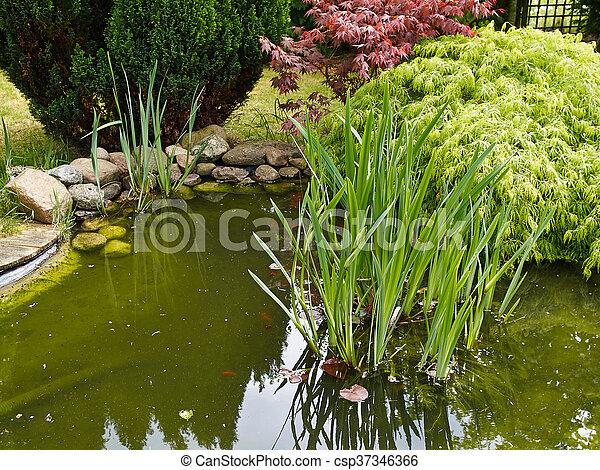 美しい, 園芸, 庭, 古典である, fish, 背景, 池 - csp37346366