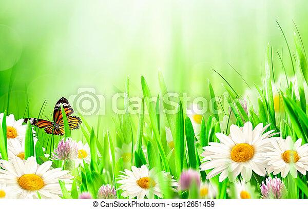 美しい, 春の花, カモミール, 背景 - csp12651459
