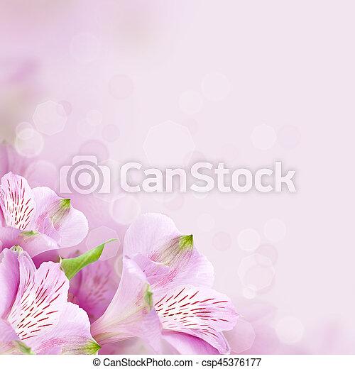 美しい, 春の花, 背景, 自然 - csp45376177
