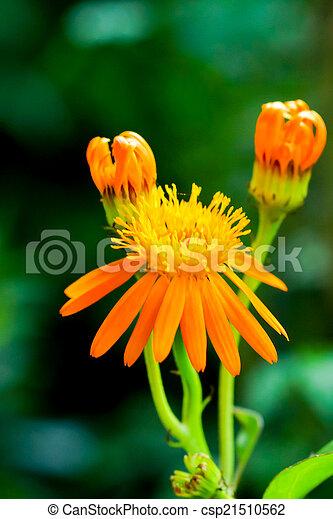 美しい, 春の花, 背景, 黄色 - csp21510562