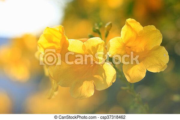 美しい, 春の花, 背景, 黄色 - csp37318462