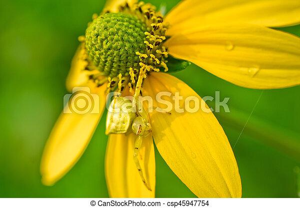 美しい, 春の花, 背景, 黄色 - csp45947754