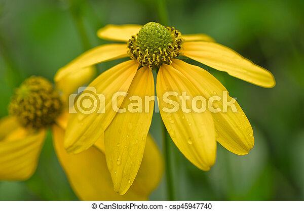 美しい, 春の花, 背景, 黄色 - csp45947740
