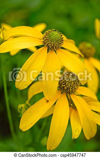 美しい, 春の花, 背景, 黄色 - csp45947747