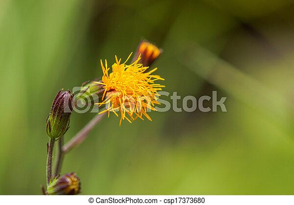 美しい, 春の花, 背景, 黄色 - csp17373680