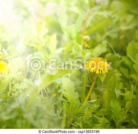 美しい, 春の花, 芸術, 背景 - csp13653196