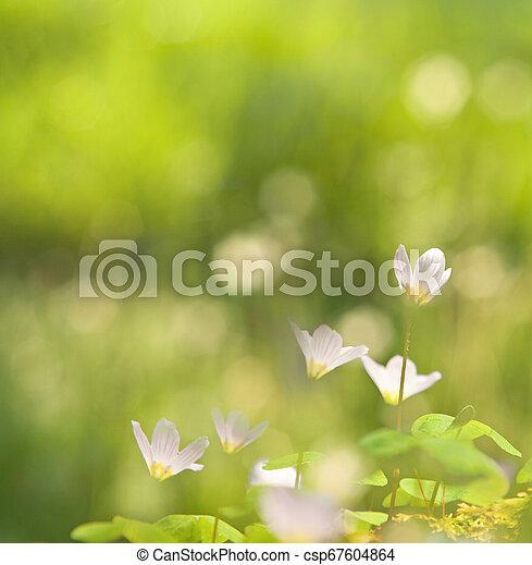 美しい, 春, 緑の背景, ぼんやりさせられた - csp67604864