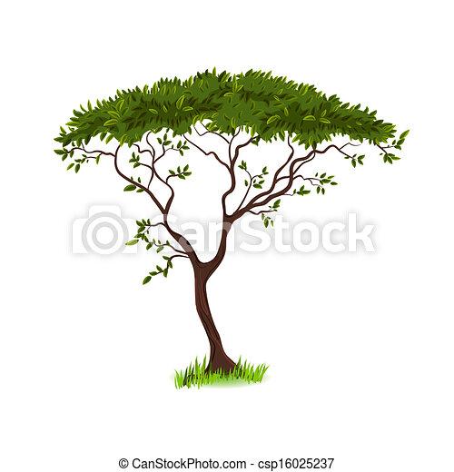 美しい, 木, デザイン, あなたの - csp16025237