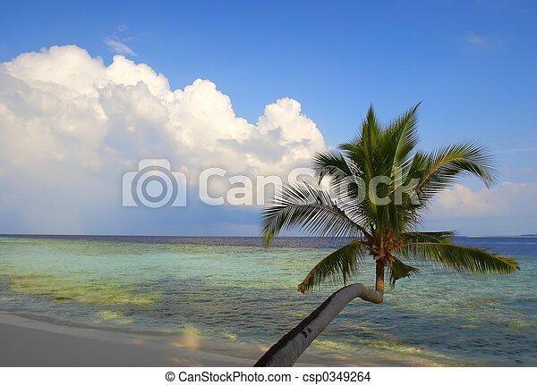 美しい, 浜, ヤシの木 - csp0349264