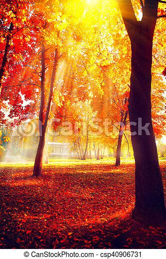 美しい, 自然, autumn., 公園, 秋, scene., 秋 - csp40906731