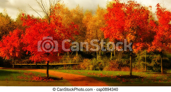 美しい, 色, 秋 - csp0894340
