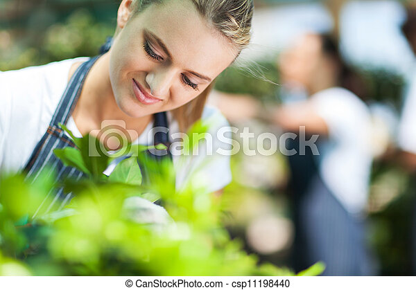 美しい, 花屋, 庭, 仕事 - csp11198440
