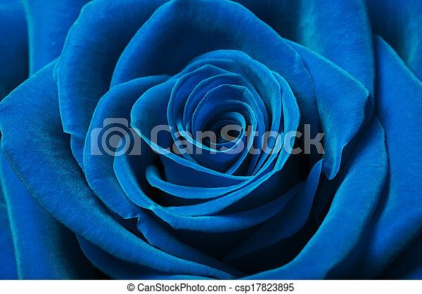 美しい, 青, バラ - csp17823895